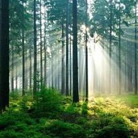 20151020095329 fortrollande skog large2